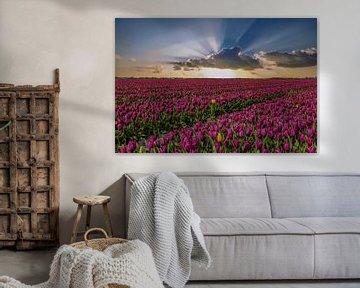Tulpenvelden in Nederland, de Bollenvelden van Gert Hilbink