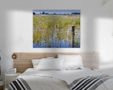 Schwalbe am Fluss IJssel von Greta Lipman