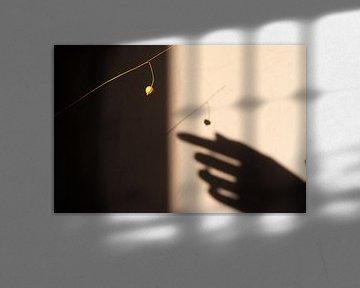 Schattenspiel an der Wand. von Gijsje Bergs