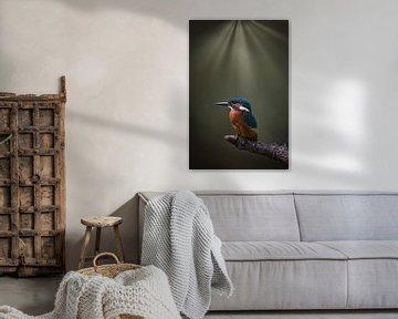 Le martin-pêcheur sous les projecteurs sur Maurice van de Waarsenburg