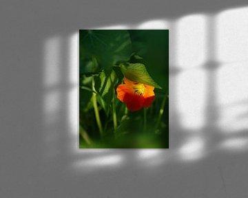 Versteckte Blume von Anouk Beunen