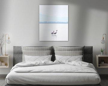 Wilde Flamingos