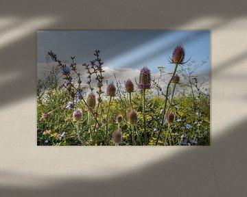 Bordure de champ hollandais avec des plantes à fleurs sur Ruud Morijn