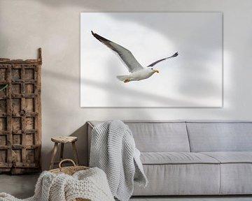 Vliegende Mantelmeeuw   Dierenfotografie van Marjolijn Maljaars