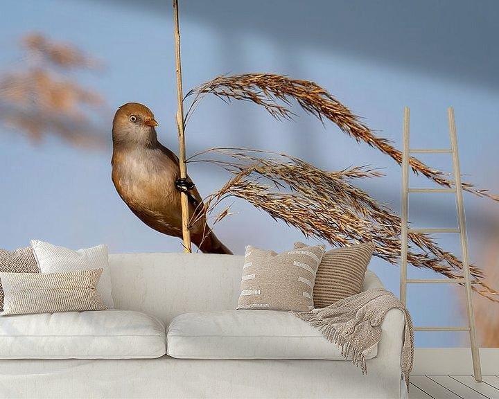 Sfeerimpressie behang: Baardmannetje (Panurus biarmicus) Vrouw van Marcel Pietersen