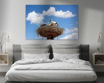 Störche auf ihrem Nest,Rust,Neusiedler See
