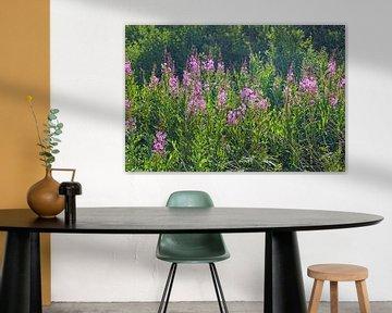 Paysage fleuri en Écosse sur Babetts Bildergalerie