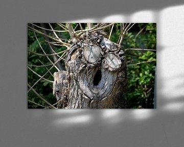 Gesicht an einem Baum von Heiko Kueverling