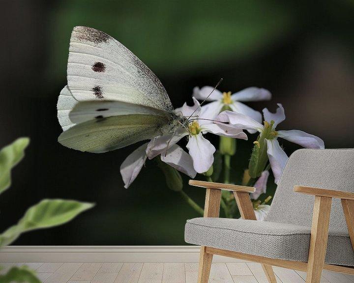 Impression: Papillon blanc sur Paul Franke