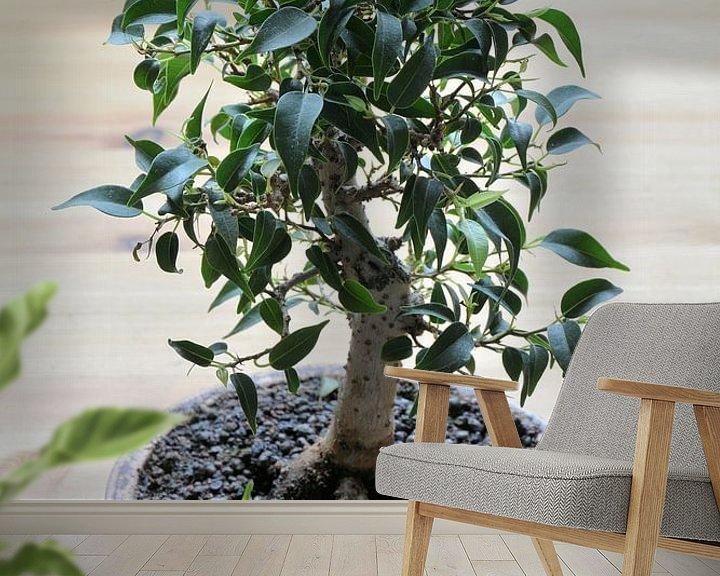 Sfeerimpressie behang: Bonsai van een Ficus benjamina van Heiko Kueverling