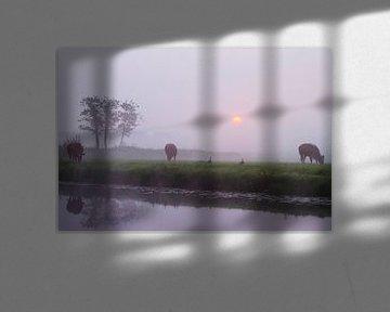 Koeien in de mist langs de Haarlemmertrekvaart van Menno van Duijn