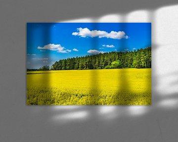 Gelbes Rapsfeld im Frühling mit blauem bewölktem Himmel und Waldhintergrund von Alex Winter