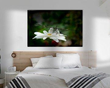Serene Vlinder van Matani Foto