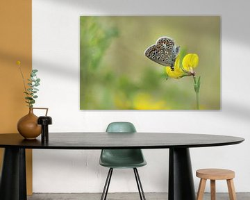 vlinder van Remco loeffen