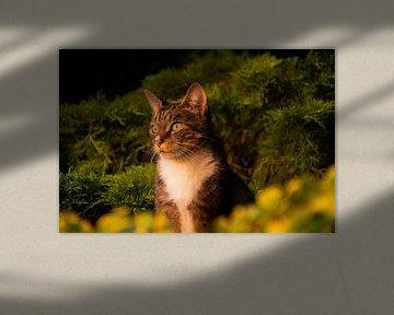 Kat geniet op de schutting van FotoGraaG Hanneke