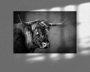 Schottischer Highlander: hartes Porträt in Schwarz-Weiß von Marjolein van Middelkoop