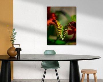 Kleurrijke bloem Heliconia rostrata van Martijn Tilroe