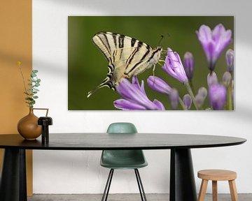 Vlinder Koningspage van Silvia Groenendijk