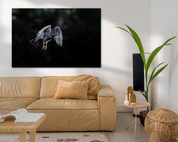 Havik vliegt in zonnestraal van Henk Bogaard