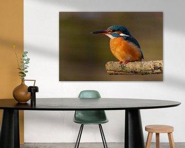 IJsvogel op een tak van Silvia Groenendijk