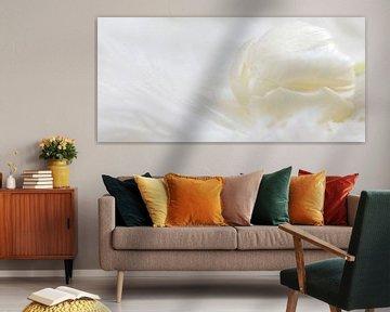 Weiße Tulpe von Miranda van Hulst