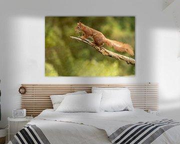 Écureuil, casse-cou