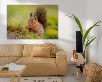 Un écureuil inspecte sa nourriture