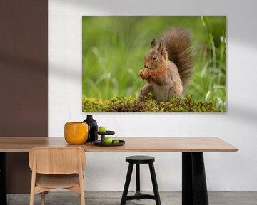 Écureuil dans la nature