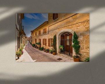 Typische Straße mit Topfpflanzen in der Altstadt von Alcudia auf Mallorca, Spanien, Balearische Inse von Alex Winter