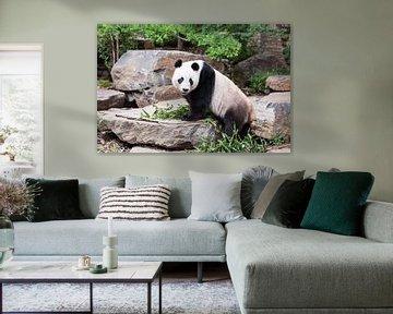 Een panda op een rotsblok met zijn eten tussen zijn voorpoten von Henk van den Brink