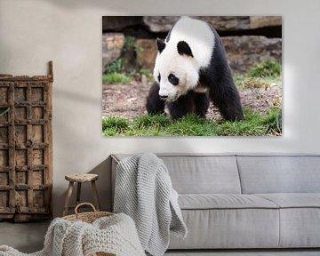 Een Reuzenpanda op zoek naar voedsel von Henk van den Brink