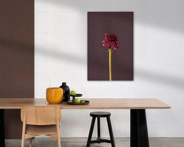 Rosa Totenblume (lila) von michel meppelink