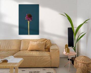 Rosa Totenblume (blau) von michel meppelink