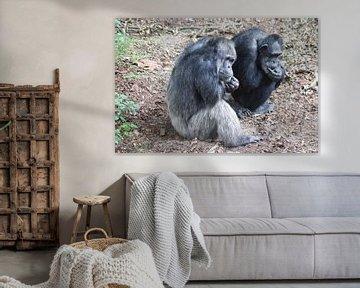 Oude en wijze chimpansee van Ronald en Bart van Berkel