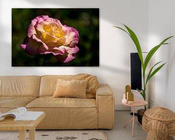Rosa mit gelber Rose von 2BHAPPY4EVER.com photography & digital art