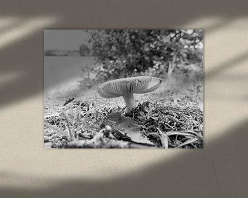 Pilze im Sommer Frankreich von Delphine Kesteloot