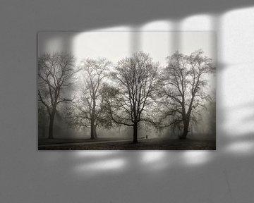 Paysage de parc avec des arbres dans la brume sur Heiko Kueverling