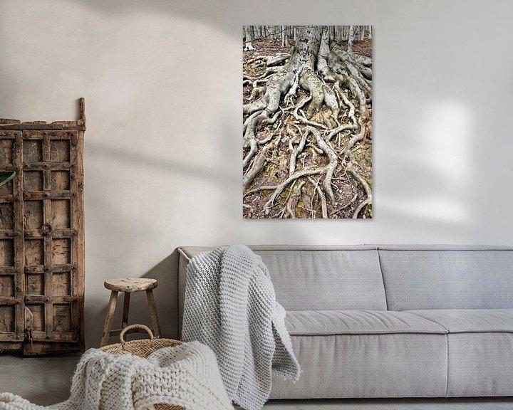 Impression: Racines d'un vieux hêtre cuivré (Fagus sylvatica) sur Heiko Kueverling