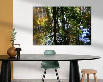 Sommerliche Spiegelung im Wald 1