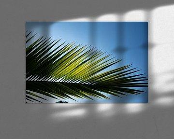 feuille de palmier 2 sur Nienke Stegeman