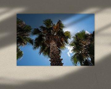 palmier3 sur Nienke Stegeman