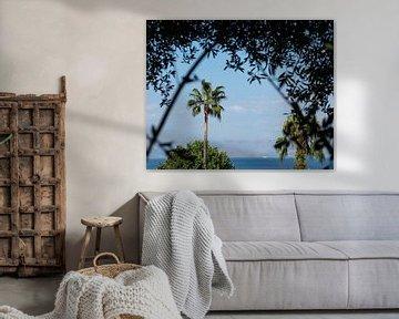palmier vista sur Nienke Stegeman