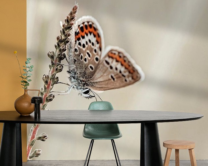 Sfeerimpressie behang: Heideblauwtje met mooie vleugels van Roosmarijn Bruijns