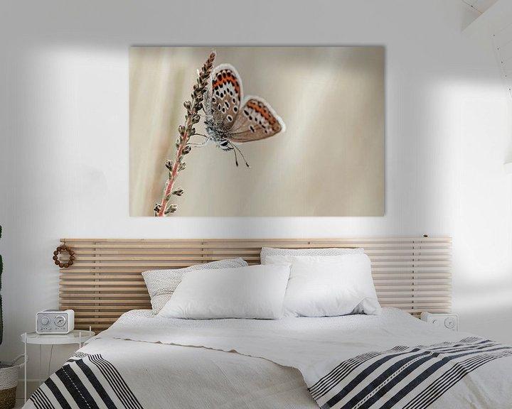 Sfeerimpressie: Heideblauwtje met mooie vleugels van Roosmarijn Bruijns