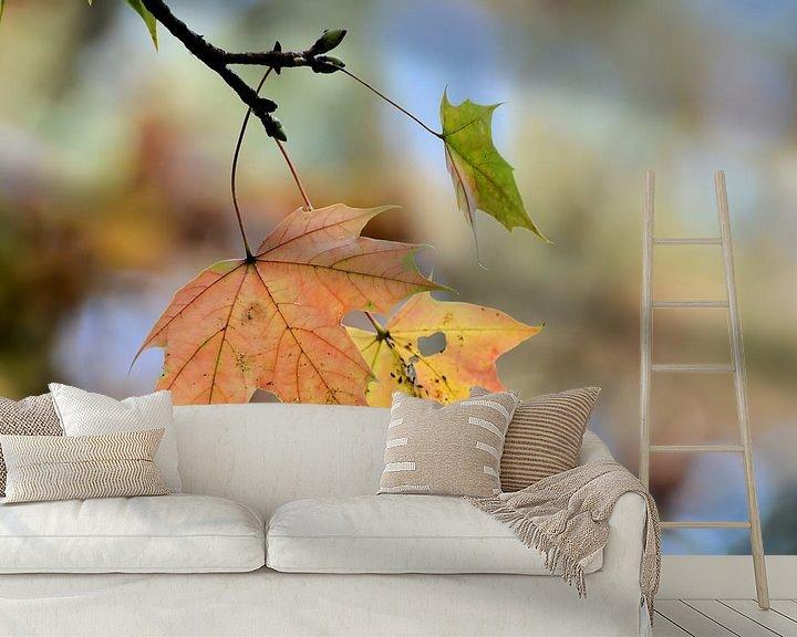 Sfeerimpressie behang: Esdoorn met herfstverkleuring van Heiko Kueverling