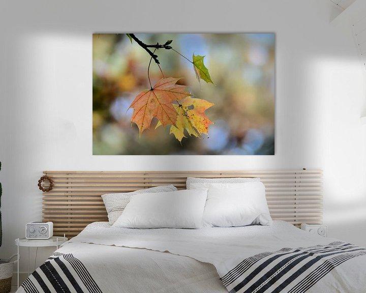 Sfeerimpressie: Esdoorn met herfstverkleuring van Heiko Kueverling