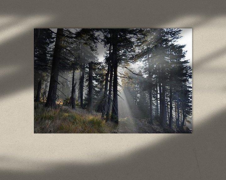 Sfeerimpressie: Bos met sparren aan de voet van de Brocken in het Harz Nationaal Park van Heiko Kueverling