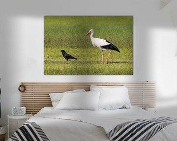 Storch folgt einem Raben