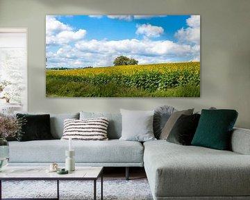 zonnebloemen veld in Luxemburg van John Ouds