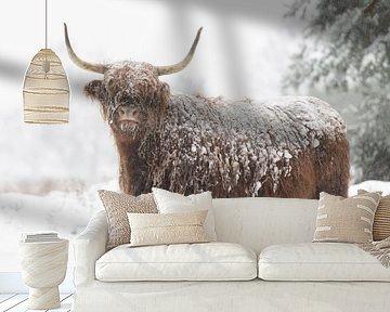 Schotse hooglander in de sneeuw van Laura Vink